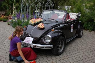 Photo: diesen Käfer können sie mieten -- bei Blumen Riedl Altmannstein - Tel. 09446/1421