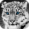 Snow Leopard Wallpaper HD : backgrounds & themes APK