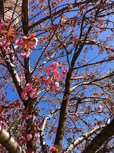 Photo: Blossoms @ Prospect Heights