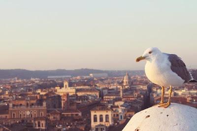 Roma  Città Eterna di luphotography