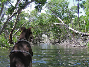 Photo: A kayak trip through the mangroves