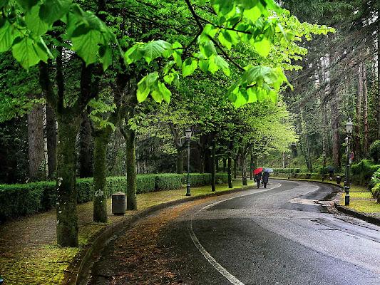 Il viale di Fiorenza Aldo Photo