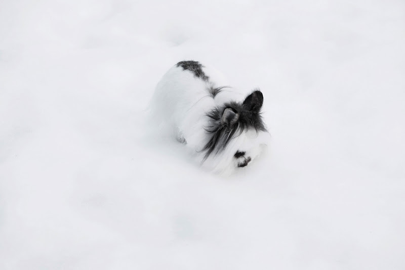 Nela neve di clic