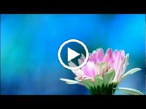 Video: A. Vivaldi  Concerto for flautino, strings   b.c. in C major (RV 443)   Amarillis -