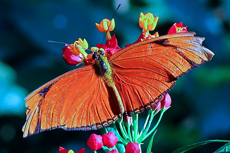 farfalla ferita di Marygio16