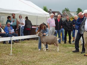 Photo: Rubriek 1: eenjarige toggenburger geiten. 1a. Flora vd Lage Landen;