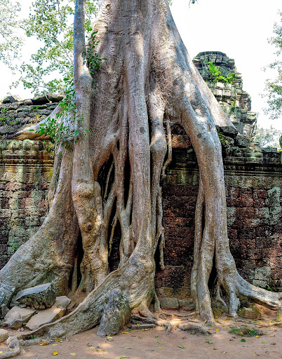 cambodia-angkor-tree-roots.jpg - The most intriguing of the Angkor Wat Temples: Ta Prohm, a forest temple where the trees now entwine with the walls and foundations.