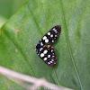 Day Flying Moth
