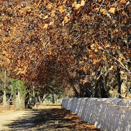 Skaduwee. #shadowy #autumn #leaves #wall #old #cemetry #nieubethesda #begraafplaas #easterncape #southafrica #menseselense #canon #canonsx50hs by Deon Strydom - Landscapes Travel