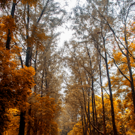Autumn Street by Topu Saha - City,  Street & Park  Street Scenes ( dhaka, city, tree, trees, botanical, road, street, botanical garden, topu saha, garden, autumn, bangladesh, park,  )