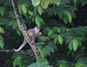 Photo: Nibbling high in the forest