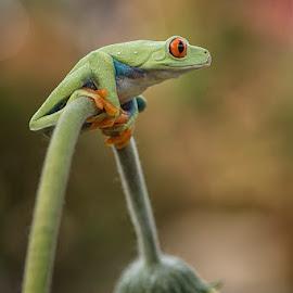 Alone by Syarif Rohimi - Animals Amphibians (  )