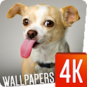 Funny Wallpapers 4k icon