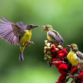 by Abdul Rahman - Animals Birds