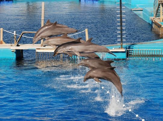 Delfini di poling1971
