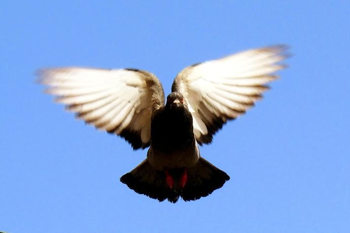 Fly di Titino