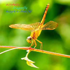 insect by SANGEETA MENA  - Typography Quotes & Sentences
