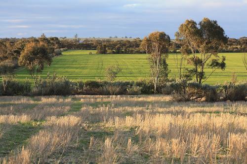 640 acres Murrayville Victoria