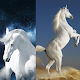 Horse Wallpapers 4K for PC-Windows 7,8,10 and Mac