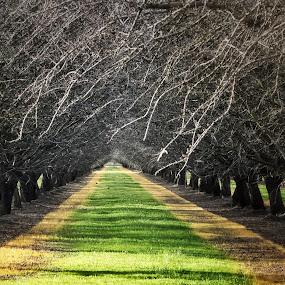 by Doug Skinner - Landscapes Prairies, Meadows & Fields