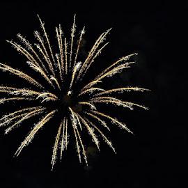Fireworks by Jessica Rose - Uncategorized All Uncategorized ( firework, independenceday, 4thofjuly, fireworks, holiday,  )