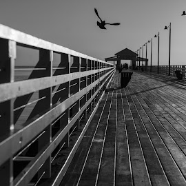 Shorncliffe Pier B&W by Craig Warton - Black & White Buildings & Architecture ( bird, pigeon, moreton bay, black and white, brisbane, timber pier, pier, lines, shorncliffe )