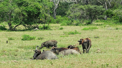 Photo: Yala National Park - (c) wsylvie 2015