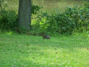 Photo: is that a beaver ?