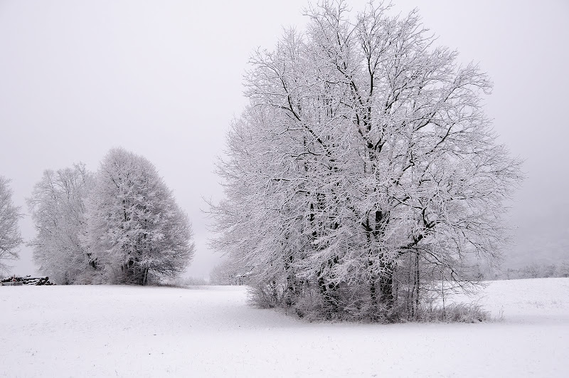 Nevicata di vito_masotino