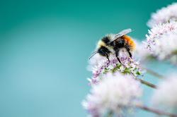 Bee di marina_mangini