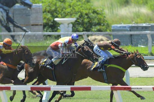 Algo Mio (Señor Candy) conquistó Condicional (1400m-Pasto-PAL). - Staff ElTurf.com