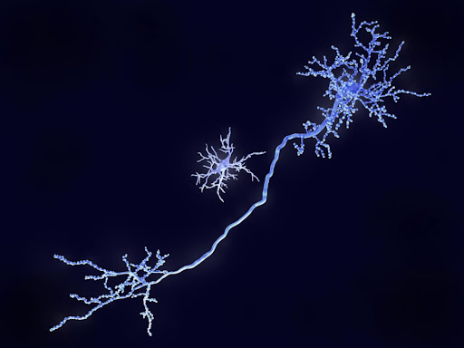 These brain immune cells could help develop new epilepsy treatments