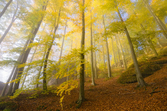 """Photo: On the top of """"Kleiner Winterberg"""" was very cool this morning. Stunning conditions, fog and sometimes sunlight at the same time. I found this wide-angle perspective very dynamic and I like it very much. Hope you like it too ;)  #photoplusextract  #saxonswitzerland  #saxony  #nationalpark  #autumn   #landscapephotography curated by +Margaret Tompkins, +Carra Riley, +Ke Zeng, +David Heath Williamsand +paul t beard  #hqsppromotion curated by +Marina Versaci, +Rinus Bakker, +Syuzanna Avetisyan, +Mukundh Band +Thierry Raemaekers +HQSPPromotion  #10000photographersaroundtheworld by +Robert SKREINERand +Walter Soestbergen+10000 PHOTOGRAPHERS around the World"""