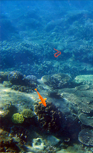 Ryby - náhled