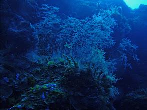 Photo: Underwater garden