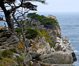 Photo: 95. Cypress trees, lichens, flowers, rocky shore, and cormorants ... so much to love.