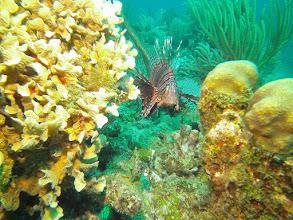 Photo: Lionfish