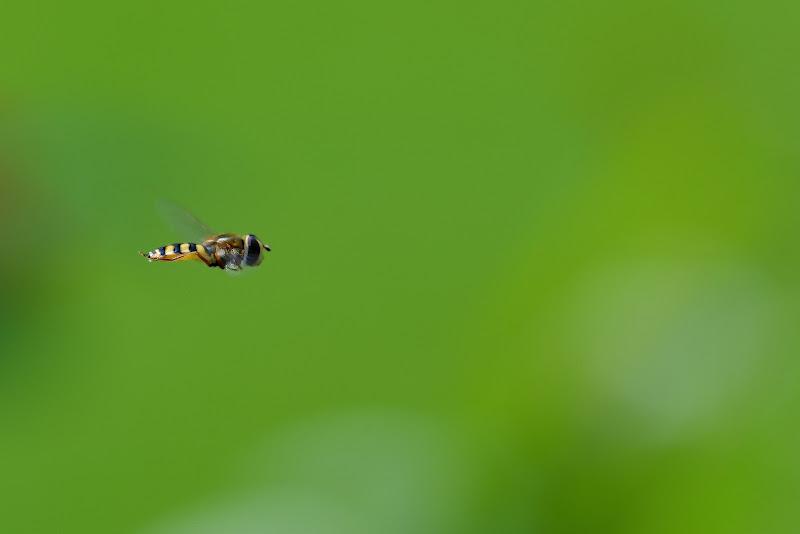 Fly di Claudio Tenca
