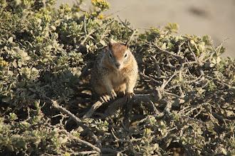 Photo: fat squirrel