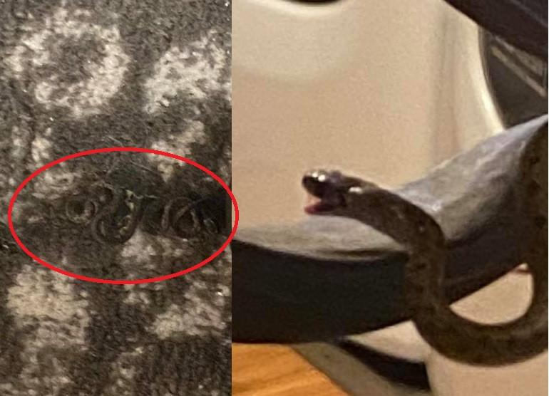 Woman Finds Family of 18 Snakes Living Under Her Bed ...