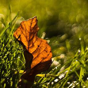 by János Farkas - Nature Up Close Leaves & Grasses ( fall leaves on ground, fall leaves )