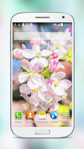 春天的花 樱花 动态壁纸