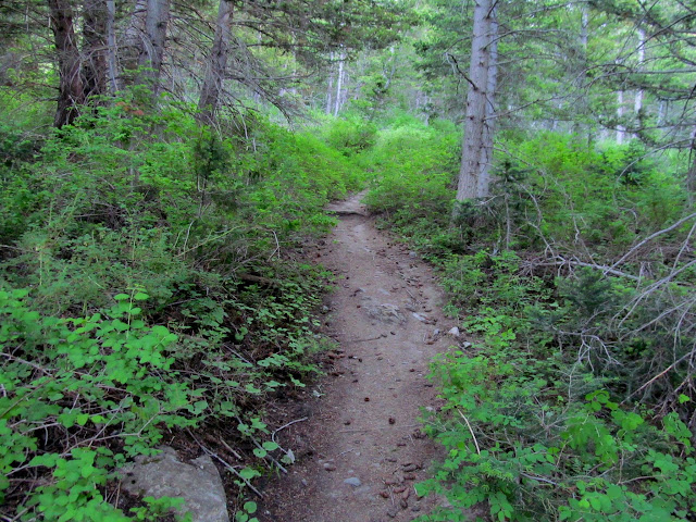 Trail through Mill Fork