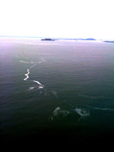 Photo: That's Alcatraz out there!