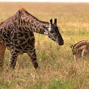 Jirafa (Giraffe)