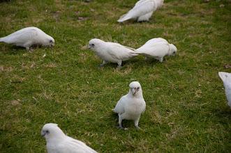 Photo: зустріли підбитих попугаїв