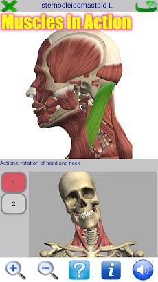 Visual Anatomy 2のおすすめ画像1