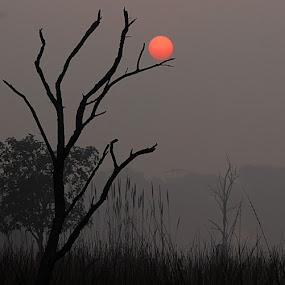Catch by Abhishek Singh - Novices Only Landscapes