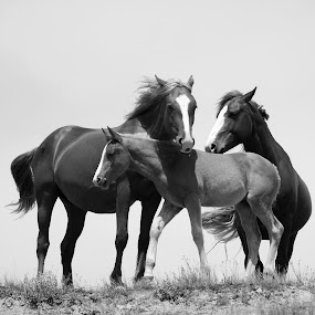 by Barbara Lokken - Black & White Animals