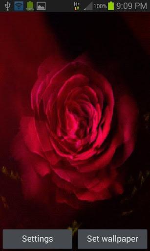 Flare Pink Rose LWP